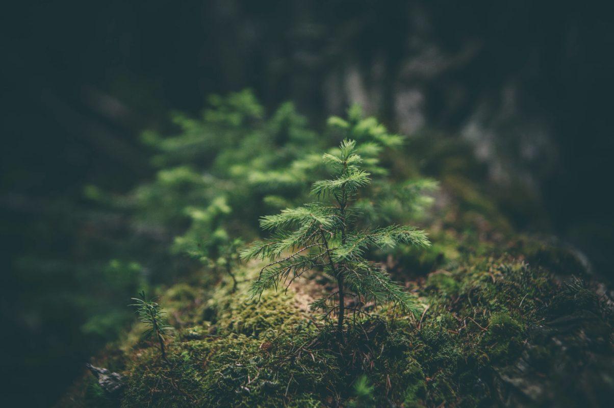Bugün bir fidan, yarın bir orman
