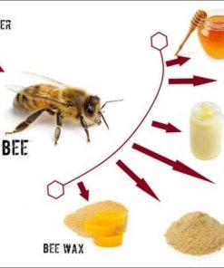 Pure natural organic honey bee ven