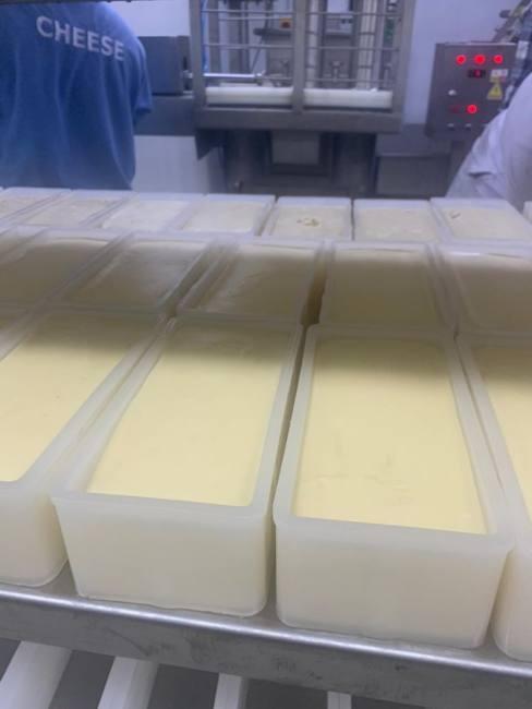 Kashkaval cheese making production