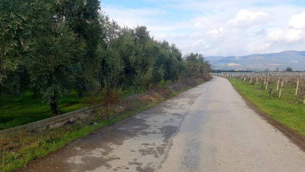 Olive ranch for sale 21,500 m2 izn