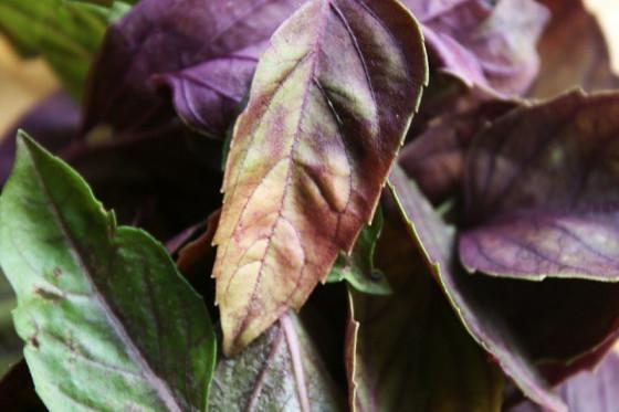 PURPLE BASIL herbal tea