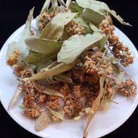Linden Tea Herbal Nutritious Natur